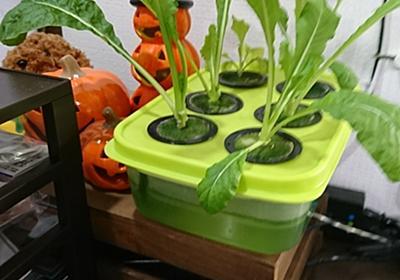 自宅ルーターとNASの廃熱で野菜を育てる - Mana Blog Next