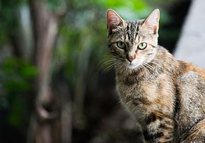女性が死の危機に…その理由は猫による引っ掻き傷だった! – Switch News(スウィッチ・ニュース)