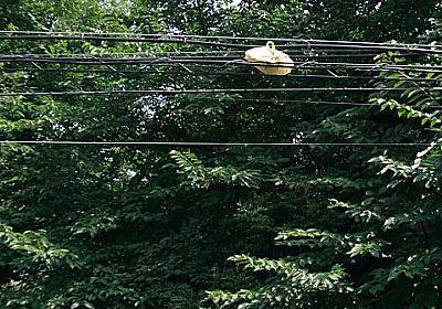 電線に弁当 | D-KNOTS BLOG
