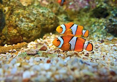 魚の言葉にも「方言」がある:研究結果|WIRED.jp