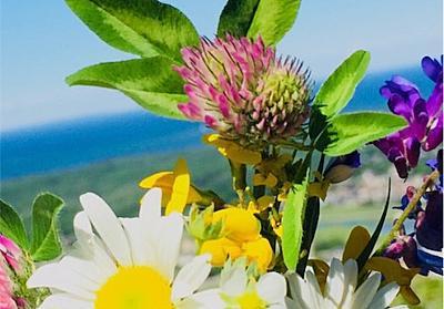 【お花】最近の嬉しかったこと【癒し】 - Mr.しょーん