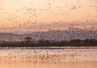 10月10日の写真活動 美唄市宮島沼にてマガンのねぐらだち - 北海道民ブルワリーのブログ