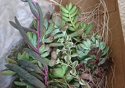 プラントキラー必見!多肉植物の育て方のおすすめ本2冊・おすすめサイト2つ