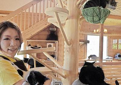 「保護ねこカフェ」開店5年、210匹送り出す 里親との幸せ第一に - 毎日新聞