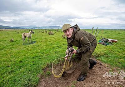 「伝統的な」ウサギ捕り、アイルランド最後の担い手 写真14枚 国際ニュース:AFPBB News