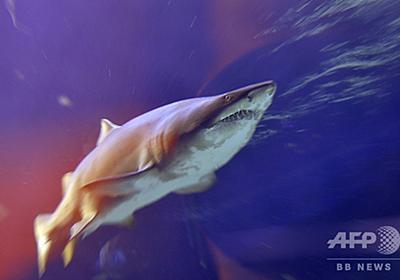 サメに襲われたサーファー、殴って撃退 豪ヌーディストビーチで 写真1枚 国際ニュース:AFPBB News