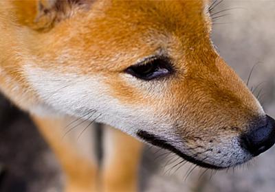 狂犬病ワクチン、広がる格安料金 獣医師会は「悪影響」と反発 | sippo(シッポ) |