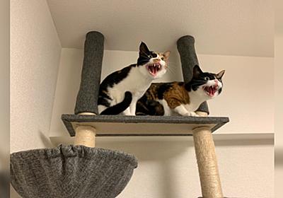 猫さんによる『掃除機を絶対に許さない会』 - Togetter