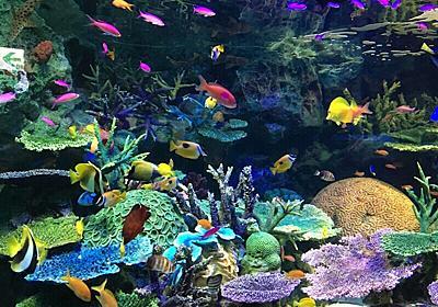 アクアリウムを作ろう!熱帯魚の飼い方と種類まとめ   Petpedia