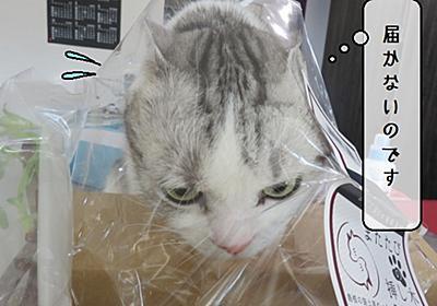 猫雑記 ~またたびの木を購入してみた飼い主~ - 猫と雀と熱帯魚