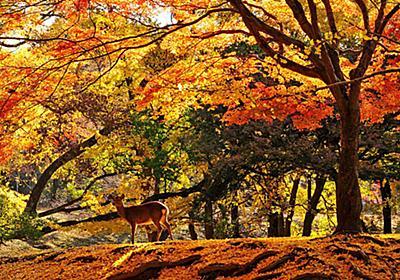 【2017年版】奈良のおすすめ紅葉スポット10選!鹿とのコラボはSNS映え確実│観光・旅行ガイド - ぐるたび