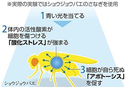 ハエ、青い光を当てるとなぜ死ぬ? 山梨の高校生が解明:朝日新聞デジタル