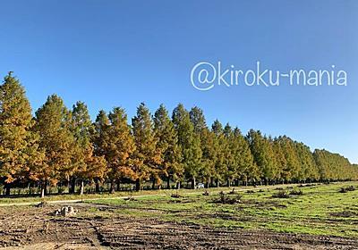 秋の初めのメタセコイヤ並木を見に行く - 続キロクマニア