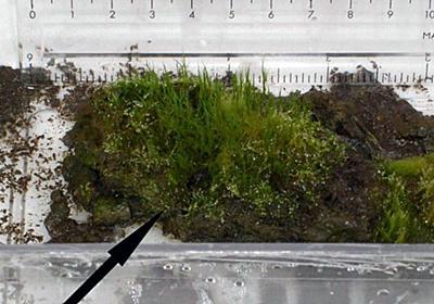1,500年前のコケが復活:「多細胞生物の仮死状態」の最高記録を更新|WIRED.jp