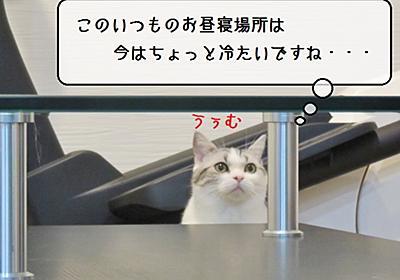 猫雑記 ~帰省時点検・すずめ編~ - 猫と雀と熱帯魚