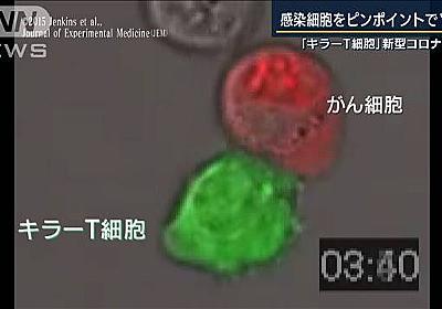 世界初 キラーT細胞でコロナ治療 キーマンに聞く|テレ朝news-テレビ朝日のニュースサイト