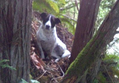 CNN.co.jp : ハイキングの男性死去、愛犬離れず吠え続けて救助待つ 米