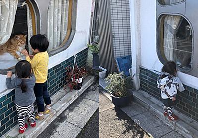 「近所の美容室に高貴な猫が二匹いる」 貫禄たっぷりの猫をのぞく子どもたちの姿がまるで「ジブリの世界」 - ねとらぼ