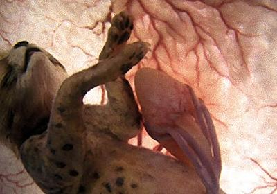 子宮の中、卵の中の動物たち。11の動物の胎児 : カラパイア