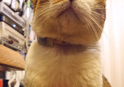 ふかふか復活 : COMPLEX CAT