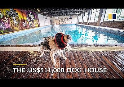 Man builds US$500,000 mansion for his dog - YouTube