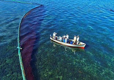 茂木外相がモーリシャス首相と会談、環境・漁業・経済支援を表明   ロイター
