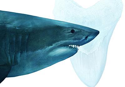 史上最大のサメ「メガロドン」はなぜ絶滅?新説 | ナショナルジオグラフィック日本版サイト