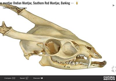 Googleがオンライン3D博物館を公開。古代の呪具から鰐の頭骨まで数百点を高精度3Dスキャン - Engadget 日本版
