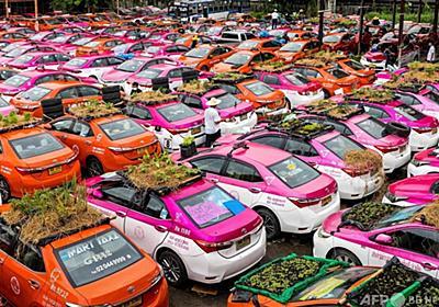 顧客失ったタクシー「菜園」として活用 バンコク 写真19枚 国際ニュース:AFPBB News