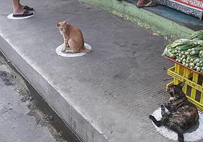 野良ネコが行儀良く「社会的距離」をあけて並んでいる光景が話題に、なぜネコは地面に描かれた円や狭い箱の中が好きなのか? - GIGAZINE