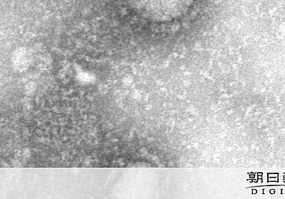 新型肺炎「エーロゾル感染」の可能性 病原体空気漂う [新型肺炎・コロナウイルス]:朝日新聞デジタル