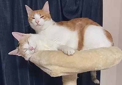 暑さのあまり幽体離脱!? 寝ていただけのネコちゃんコンビがお騒がせ写真で人々を楽しませる - ねとらぼ