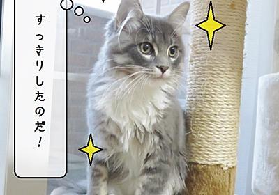 猫の道具 ~むくのシャンプー~ - 猫と雀と熱帯魚