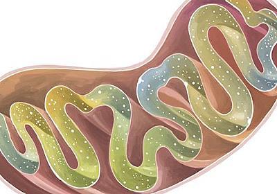 体内のミトコンドリアを増やして元気になるための3つの方法|WIRED.jp