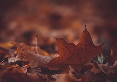 深まる秋に、50代の身の振りようを思う