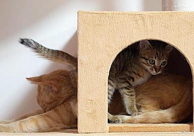 お母さんのことが大好きな子猫の健気な行動に癒される   肉球ドットコム(299.com)