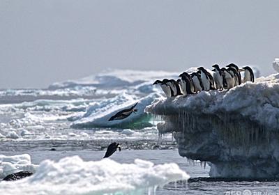 南極大陸の発見者はポリネシア人、7世紀初頭に到達か NZ研究 写真1枚 国際ニュース:AFPBB News