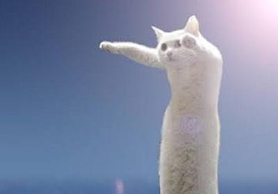 """「R.I.P.Longcat.」ネット黎明期から猫コラ画像で""""のびーるたん""""の愛称で親しまれてた長猫・のび子さんが息を引きとる… - Togetter"""