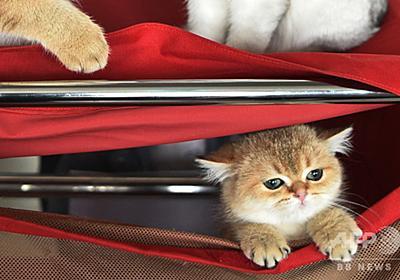 愛猫のためにも、あなたのためにも... 屋内飼育を推奨 研究報告 写真1枚 国際ニュース:AFPBB News
