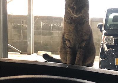 そ、、、その耳は!? - えと的日常〜猫がブログ始めました〜