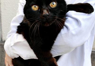 警察署のアイドル黒猫「ジジ」新庁舎に行けず…飼い猫に:朝日新聞デジタル