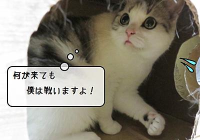 猫雑記 ~ダンボール猫タワー解体現場~ - 猫と雀と熱帯魚
