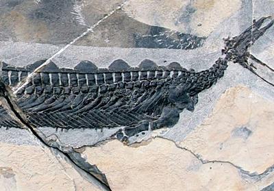 中国発:謎だらけ! アヒルみたいな頭の海洋爬虫類の化石が見つかる | ギズモード・ジャパン