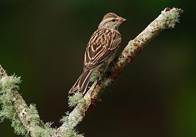 北米の鳥が激減、半世紀で約30億羽、3割が消えた | ナショナルジオグラフィック日本版サイト