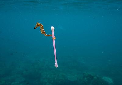 ペットボトルキャップはもはや回収していない。ごみと資源の分かれ目。プラスティックごみと海洋生物、エコキャップ運動と都市鉱山、東京の油田 - ふわゆるナチュ暮らし