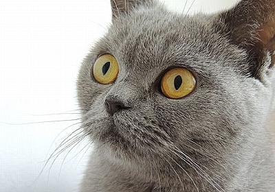 沖縄反省会・沖縄の負け - 沖縄で島猫と遊ぶ日々・(ΦωΦ)フフフ版