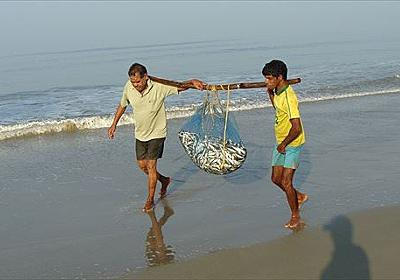 漁師だけどなんか質問ある?:お料理速報
