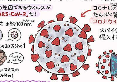 イラスト図解! これが新型コロナウイルスだ(4/28「ver.1.1」更新)|ぬまがさワタリ|note