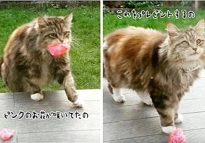 「きれいなお花が咲いてたの」自宅の庭にある花を口にくわえ、プレゼントしにくる愛すべき隣人の猫 : カラパイア