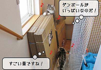 猫雑記 ~荷造り用ダンボール箱~ - 猫と雀と熱帯魚